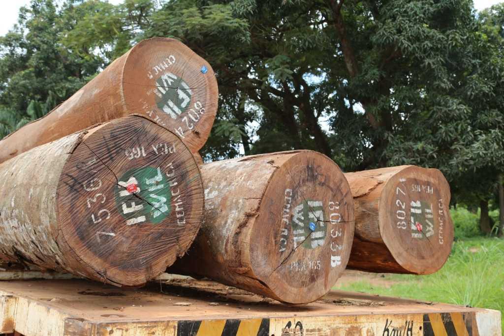 La BAD présente l'étude sur  l'industrialisation du Bois dans les pays du Bassin du Congo