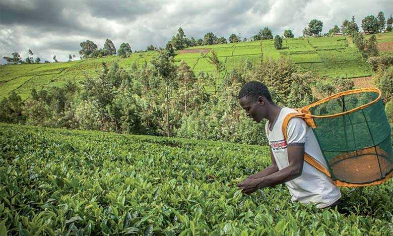 Gabon: La BAD veut s'impliquer dans l'agriculture, après les 64 milliards du projet graine en 2017.