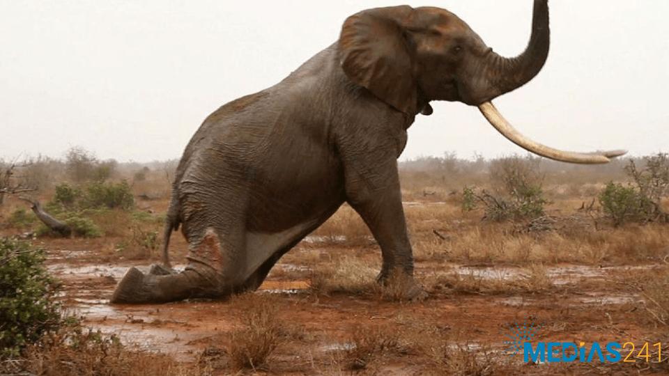 Eléphants : La chasse continue …