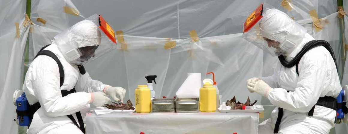 Ebola: Le Gabon active son comité de riposte.