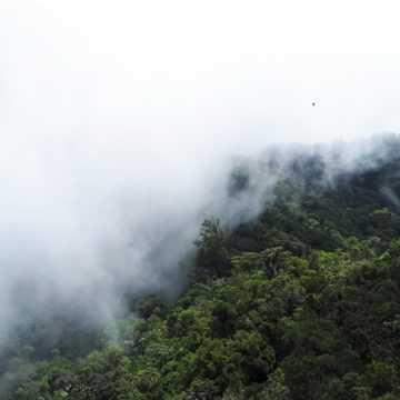 ENVIRONNEMENT : LA REDD+ A UN PLAN CONTRE LA POLLUTION