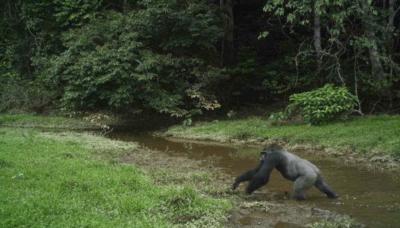 LE PARC NATIONAL DE MOUKALABA-DOUDOU MAINTENU SUR LA LISTE INDICATIVE DES BIENS DU GABON AU PATRIMOINE DE L'UNESCO