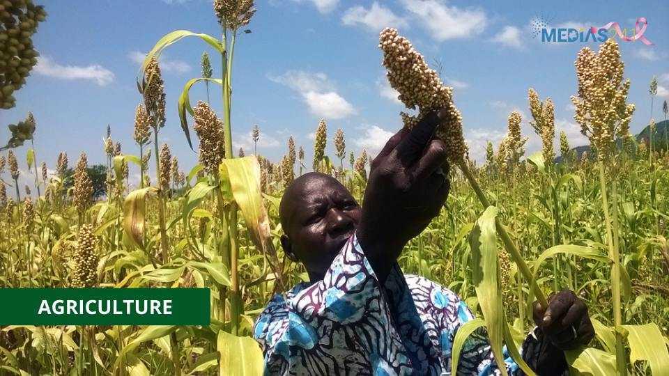 AGRICULTURE :  MISE EN PLACE D'UNE POLITIQUE SEMENCIÈRE VÉGÉTALE AU GABON