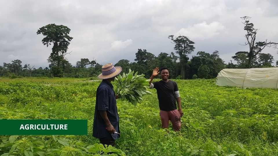 AGRICULTURE : L'APPUI MATÉRIEL DU PNUD ET DE LA FAO À 400 JEUNES GABONAIS
