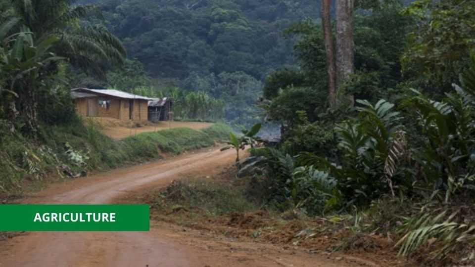 AGRICULTURE : LE GOUVERNEMENT LANCE UN APPEL D'OFFRE POUR LA RÉHABILITATION DE 53 KMS DE PISTES RURALES