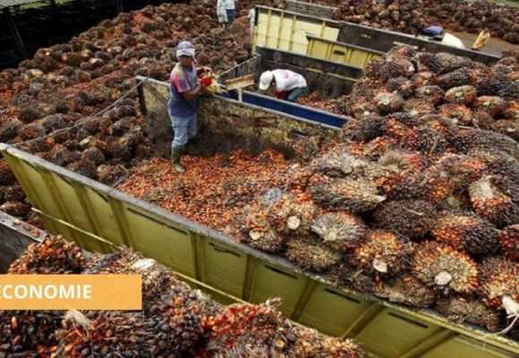 GABON : LA PRODUCTION D'HUILE DE PALME BRUTE EN AUGMENTATION DE 27,6 % en 2020