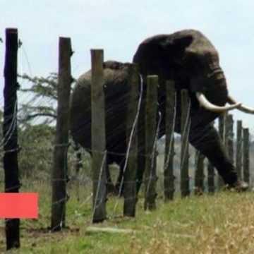 SOCIÉTÉ : UNE FEMME TUEE PAR UN ELEPHANT A FRANCEVILLE