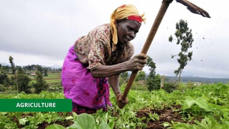 AGRICULTURE : LE GOUVERNEMENT VEUT DOMICILIER L'APPROVISIONNEMENT EN PRODUITS