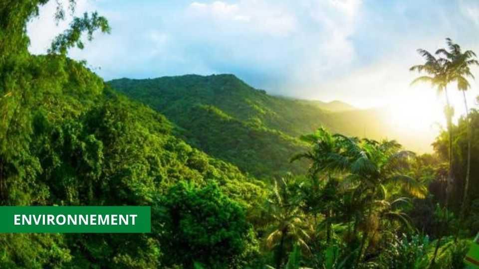 CHANGEMENTS CLIMATIQUES : CE QUE LA NOUVELLE LOI CHANGERA AU GABON